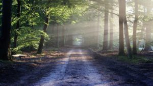 Na ratunek planecie - posadź z nami las!